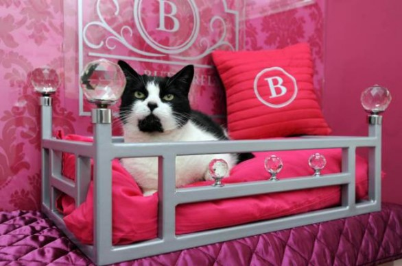 Animali, arrivano gli hotel di lusso per gatti 1
