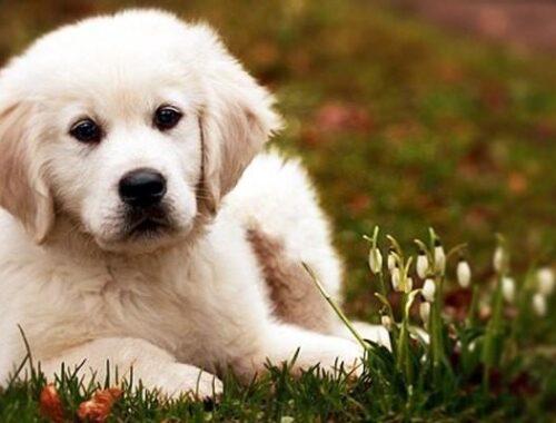 Cani di piccola taglia: le razze più adatte per tenerli in casa 3