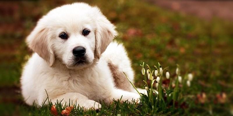 Cani di piccola taglia: le razze più adatte per tenerli in casa 4